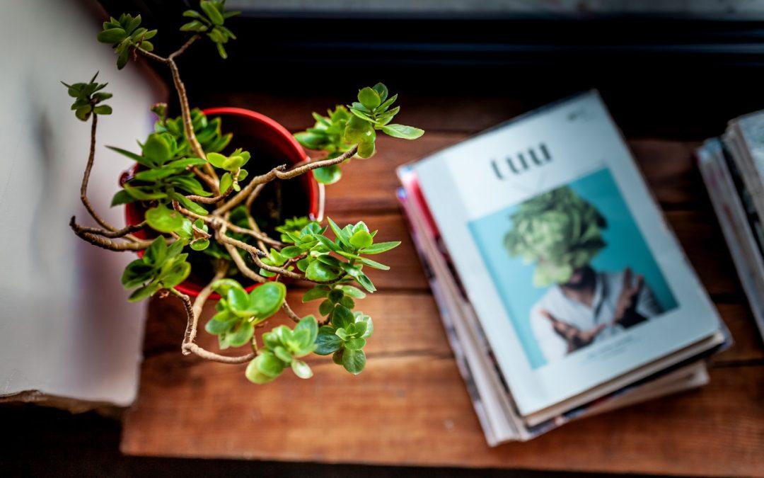 Waarom kiezen voor kunstplanten?